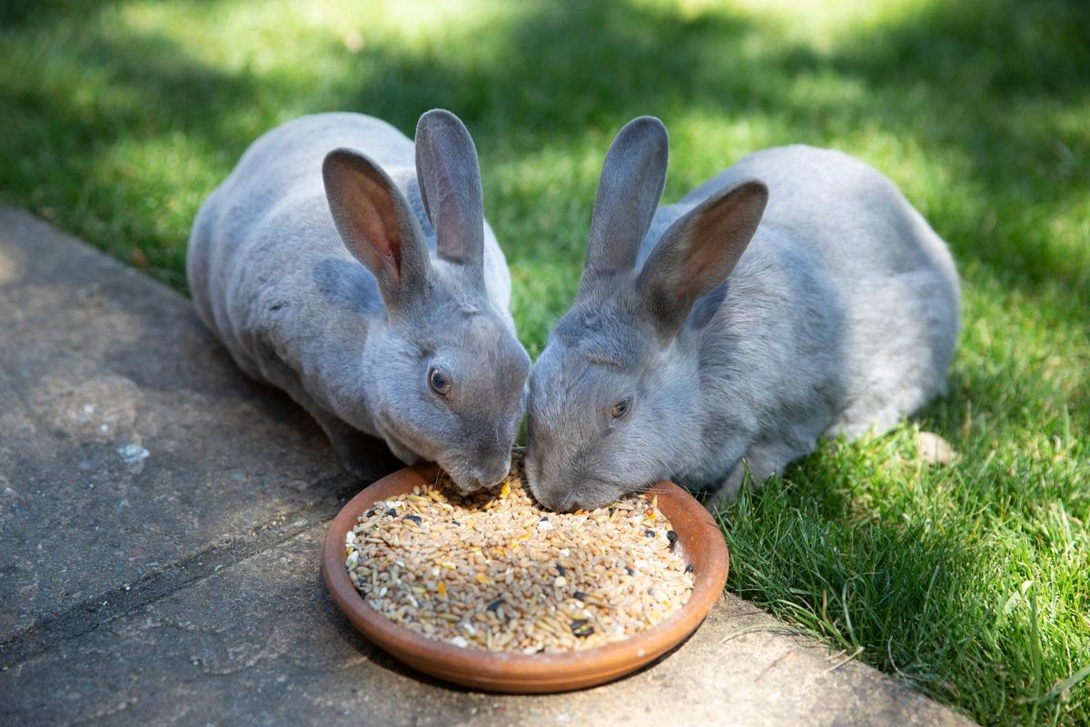 ארנבים אוכלים