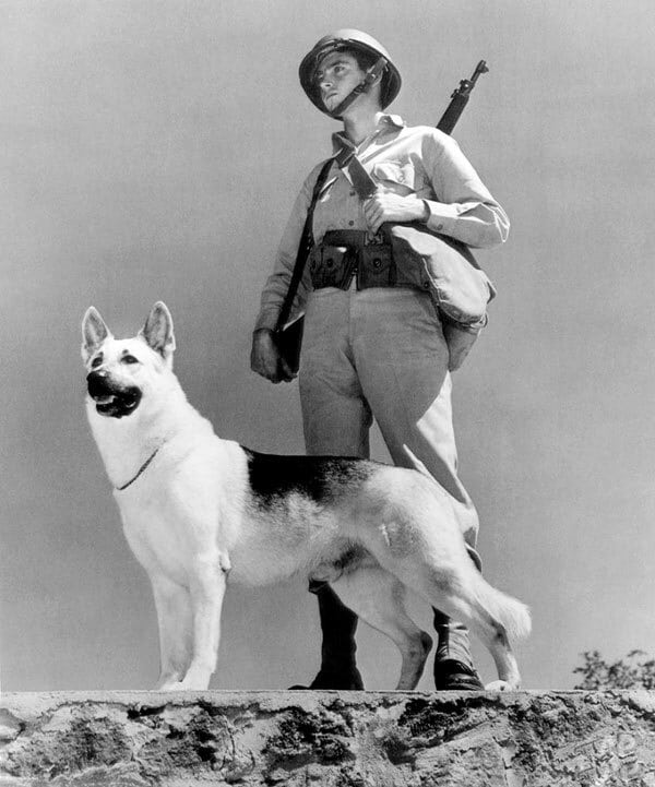 german soldier with dog old