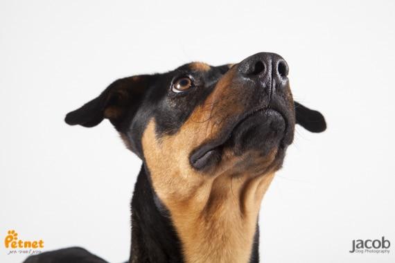 כלב לאימוץ