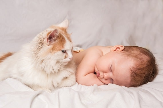 חתול ותינוק יחד