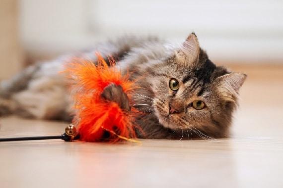 לבחור צעצוע לחתול
