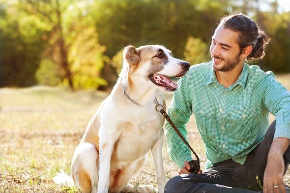 רפואה מונעת לכלב