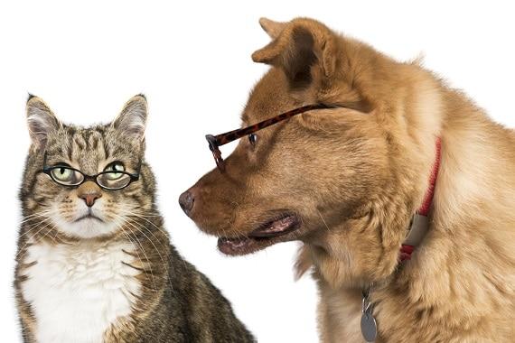 כלב וחתול מבוגרים