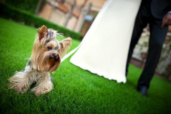 האורח החשוב ביותר: כלב לוקח חלק באירוע של בעליו