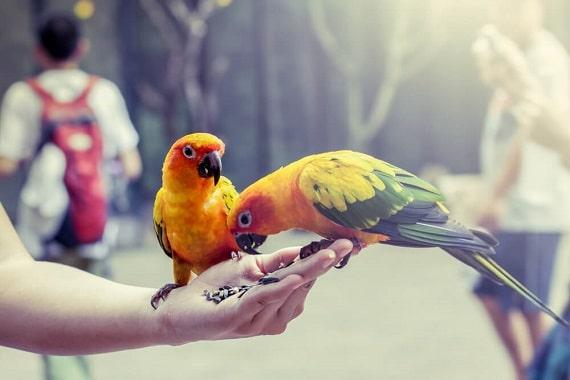 איך להאכיל ציפור