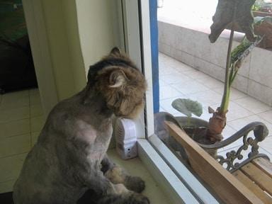 הכלב פלויד מתקרר באמצעות הלחתה