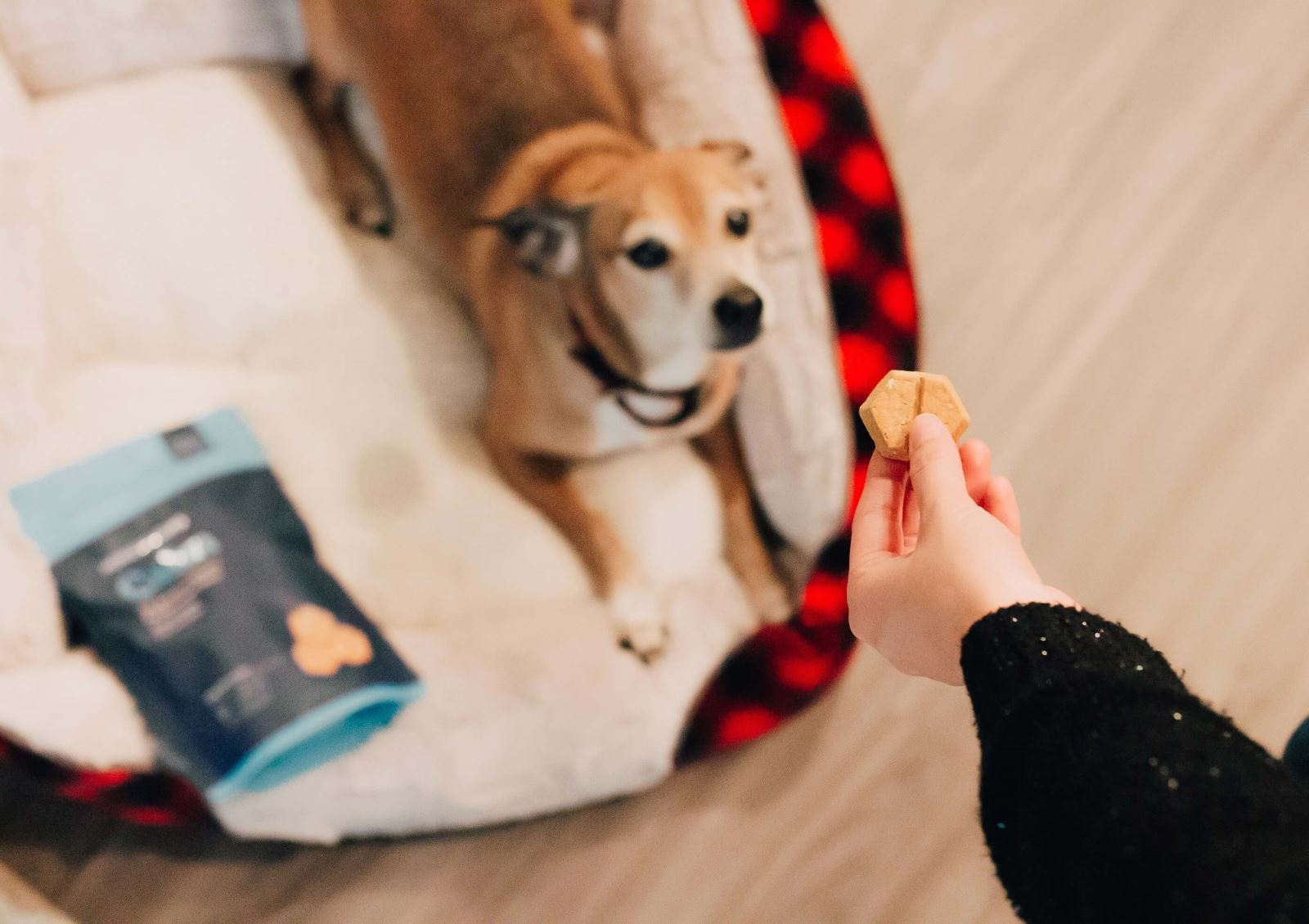 dog getting snack