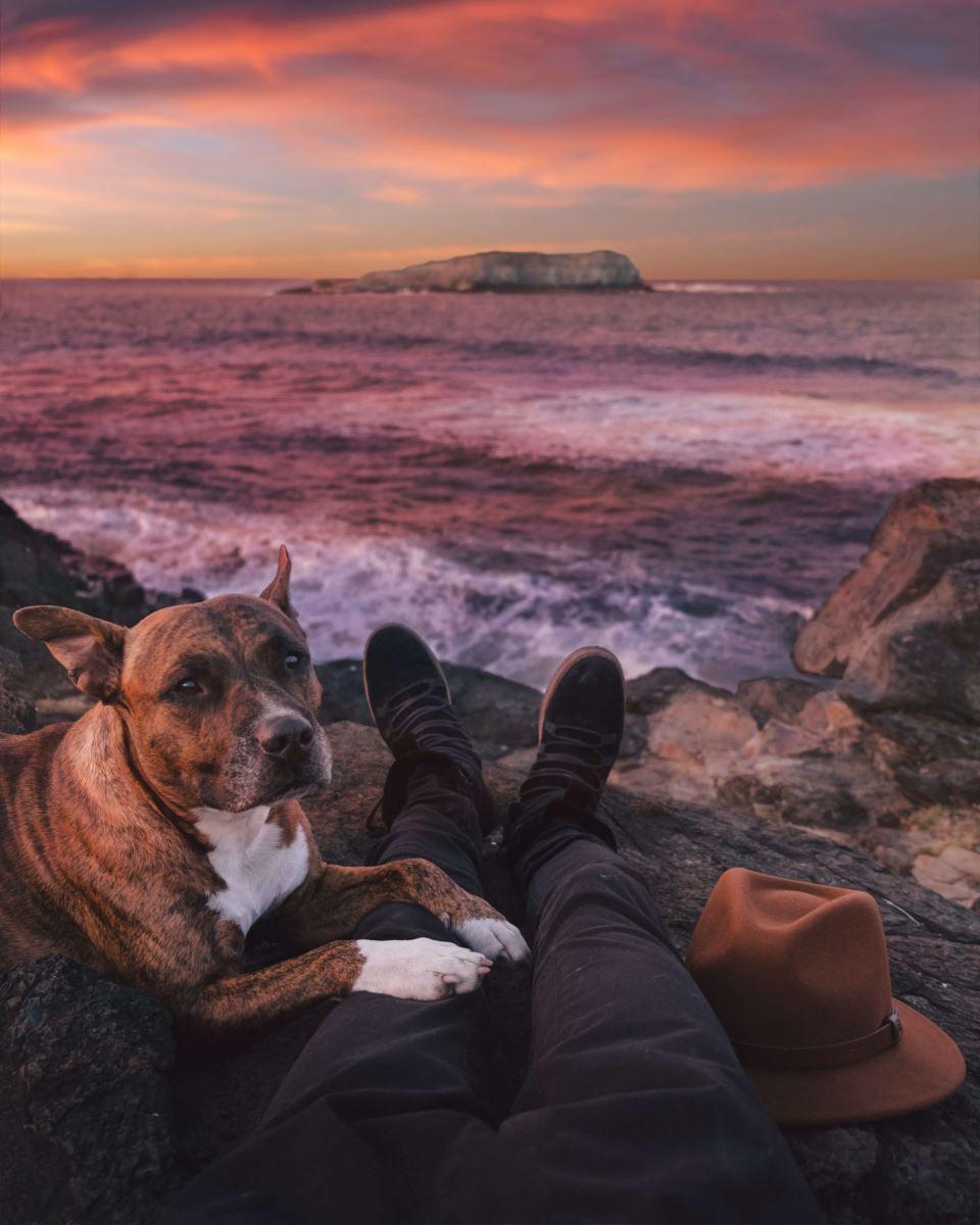 DOG ON SUNSET