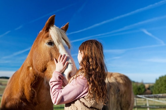 סוסים. אם אתם ניגשים אליהם כשאתם כועסים - הם יהיו מפוחדים