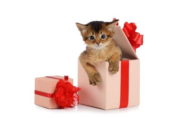 גור חתולים, גורי חתולים, טיפול בגור
