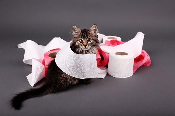 חתול שובב, בעיות התנהגות אצל חתולים