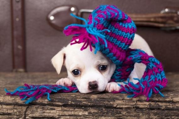 כלבים בחורף. עלולים לחשוש מברקים ורעמים