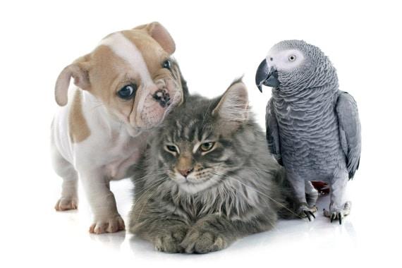5 חיות מחמד שעושות הכי טוב לבריאות