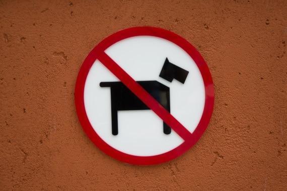דירות שמכניסות כלבים