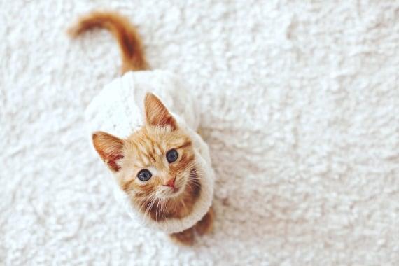 חתולים בחורף. מתקשים לשמור על חום גופם