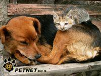 תירוש למען בעלי חיים משוטטים