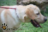 היפוך קיבה GDV בכלבים - סכנת חיים