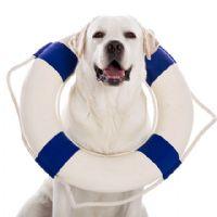 טבילה על ארבע: איך מלמדים את הכלב לשחות?