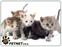 חיסונים לחתולים וחשיבותם