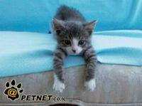 החתולה נלה