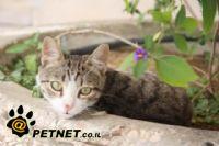 מה עושים עם חתלתול שננטש?