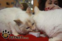 טיפים על תזונת כלבים וחתולים