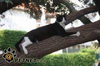 חתולי רחוב – סכנות ופגיעות נפוצות