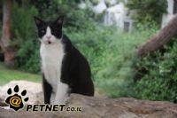 אלרגיה במזון אצל חתולים