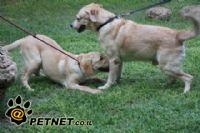 מאלף כלבים – כל אחד יכול?