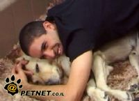 כלבי שירות לאנשים עם מוגבלויות