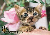 חתולים וכלבים חסרי בית מתים מהחום