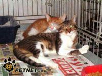 בית ידידותי לחתול