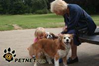 כיצד לשכנע את הסבים לא לפחד מבעלי חיים