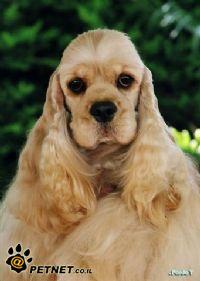 תערוכת כלבי צייד 2008