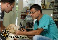 כלבך בקיץ: התקפה חזיתית שצריך להתגונן כנגדה