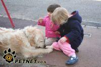 סיוע וטיפול בעזרת בעלי חיים