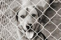 תמונת מצב אופטימית: יותר כלבים מוצאים בית מאשר מומתים