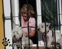 החזקה וטיפול בכלבים
