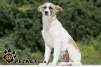 דלקות אוזניים בכלבים