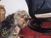 מחפשים את הכלב שון