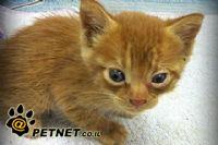 הצלת גורי חתולים