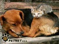 איסור ניסויים בבעלי חיים - הצעת חוק