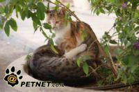 על חתולים, תרופות ומה שביניהם