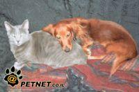 היבטים התנהגותיים ביחסים שבין כלבים  לחתולים החיים תחת קורת גג משותפת