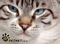 חתולים בכל צבעי הקשת