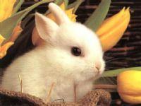 אורח חיים בריא לארנב המחמד - כיצד לשמור על תזונה מאוזנת?