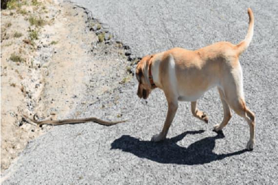כלב ונחש